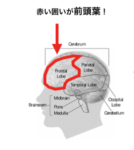前頭葉とは?前頭葉を鍛える方法とは?