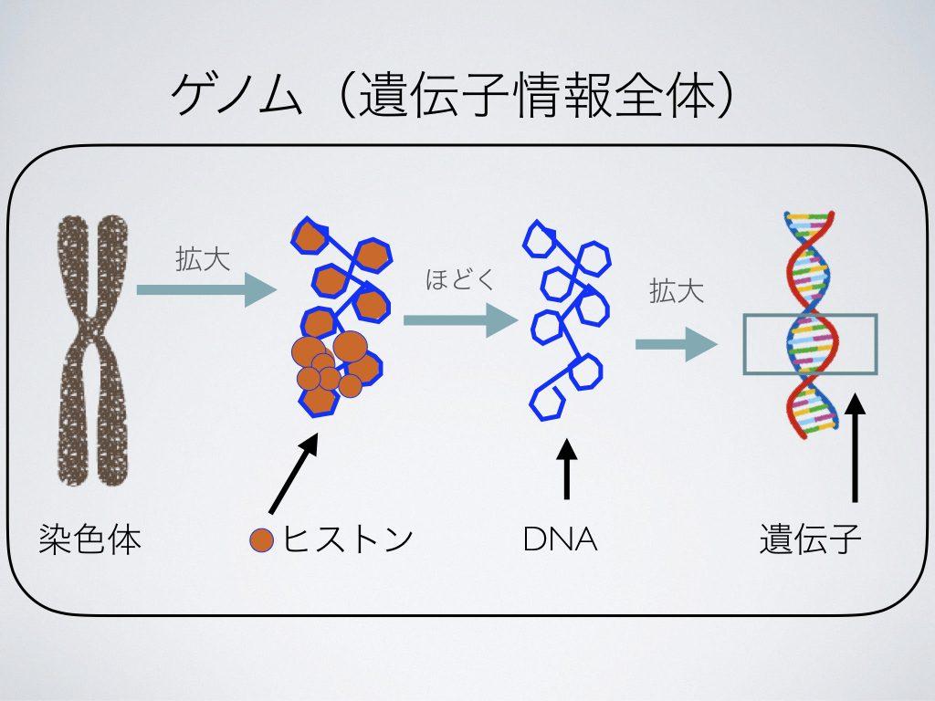 ゲノム編集技術(遺伝子情報全体)
