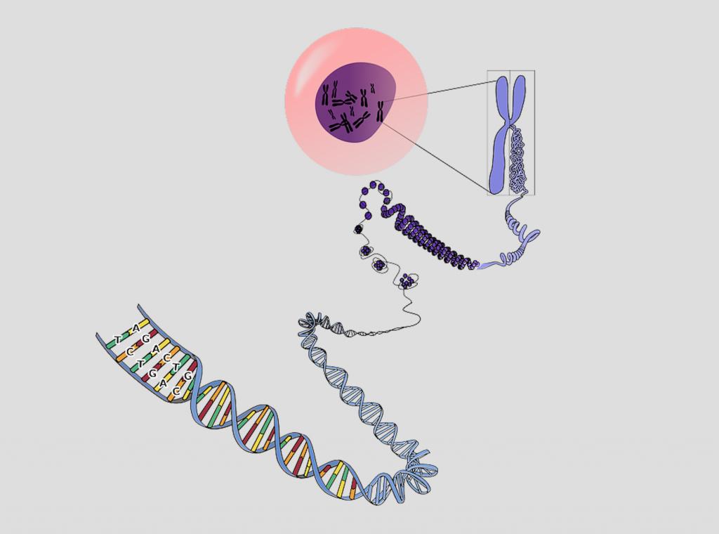 ゲノム編集技術